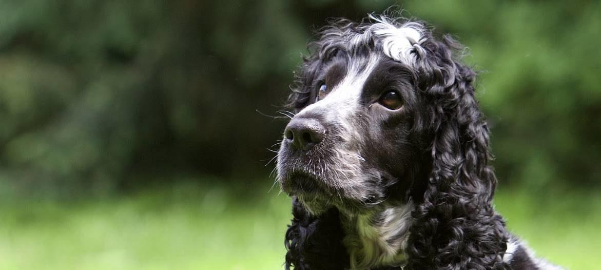We groom your dog the way you like it!